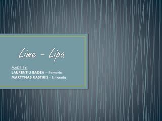 Lime -  Lipa