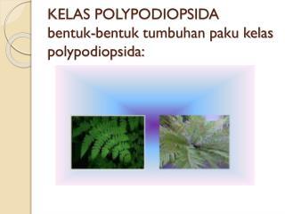 KELAS POLYPODIOPSIDA bentuk-bentuk tumbuhan paku kelas polypodiopsida:
