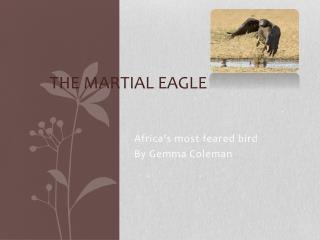 The Martial Eagle