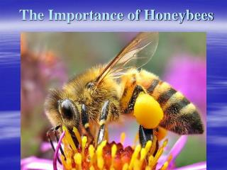 The Importance of Honeybees