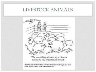 Livestock animals