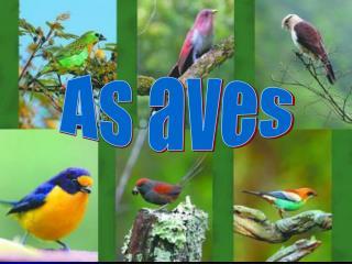 As  aves nascem de ovos com casca que s o chocados ou seja, incubados fora do corpo da f mea. T m o corpo coberto de pen