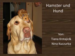 Hamster und  Hund