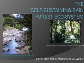 The  Self-sustaining Rain Forest Eco-System