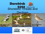 Shorebird Threats and Declines