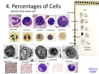 4 . Percentages of Cells