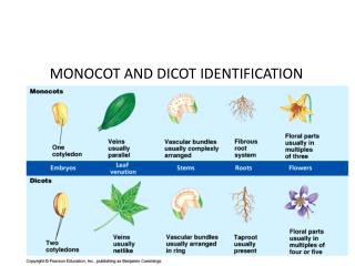 MONOCOT AND DICOT IDENTIFICATION