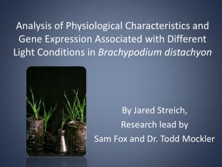 By Jared Streich, Research lead by  Sam Fox and Dr. Todd Mockler