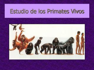 Estudio de los Primates Vivos