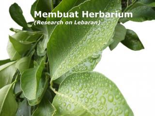 Membuat Herbarium (Research on Lebaran)