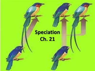 Speciation Ch. 21