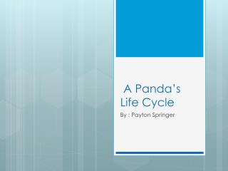 A Panda's  L ife Cycle