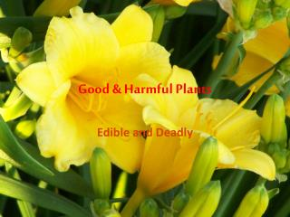 Good & Harmful Plants