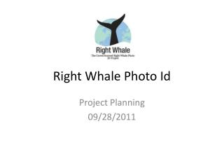 Right Whale Photo Id