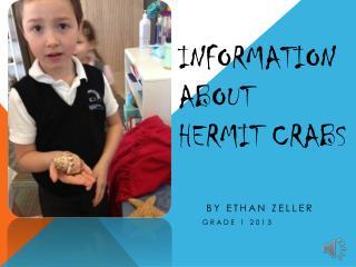 Information About  Hermit Crabs