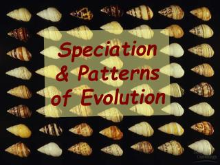 Speciation & Patterns of Evolution