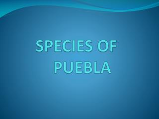 SPECIES OF PUEBLA