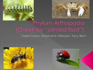"Phylum  Arthopoda (Greek for ""jointed foot"")"