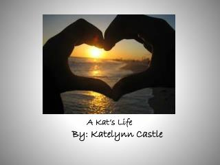 A Kat's Life
