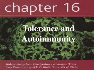 Tolerance and Autoimmunity