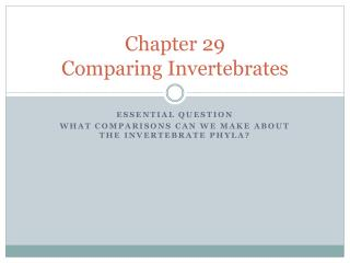 Chapter 29 Comparing Invertebrates