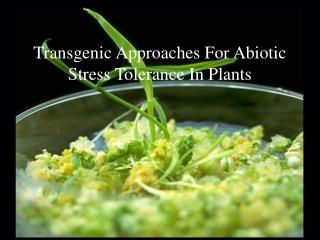 Transgenic Approaches For  Abiotic  Stress Tolerance In Plants