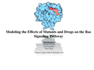 Modeling the Effects of Mutants and Drugs on the  Ras  Signaling Pathway