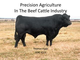 Precision Agriculture  In The Beef Cattle Industry