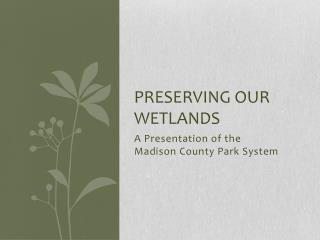 PRESERVING OUR WETLANDS