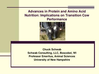Advances in Protein and Amino Acid Nutrition: Implications on Transition Cow Performance