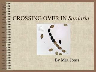 CROSSING OVER IN  Sordaria