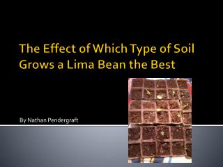 The Effect of Which Type of Soil Grows a Lima Bean the Best