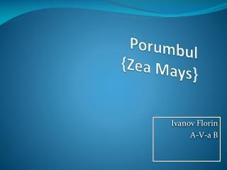 Porumbul { Zea  Mays}
