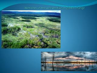 Wetlands in the perspective of global change