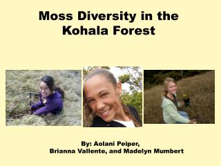 Moss Diversity in the  Kohala  Forest
