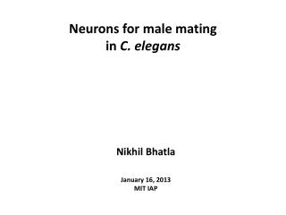 Neurons for  male mating  in  C . elegans