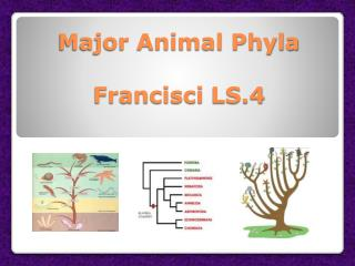 Major Animal Phyla Francisci  LS.4