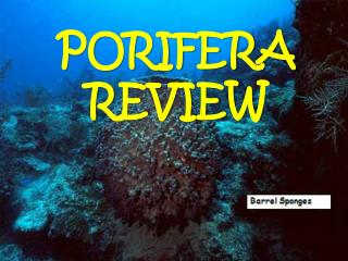 PORIFERA REVIEW
