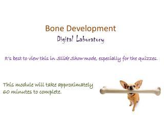 Bone Development Digital Laboratory