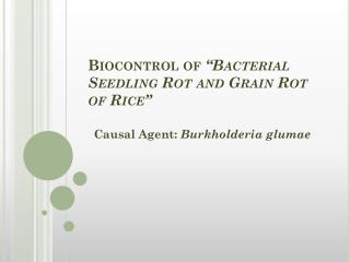 "Biocontrol of  ""Bacterial Seedling Rot and Grain Rot of Rice"""