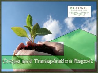 Crops and Transpiration Report