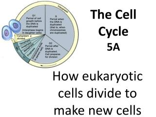 The Cell Cycle 5A