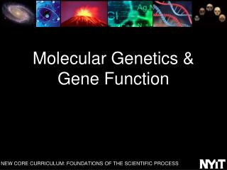 Molecular Genetics & Gene Function