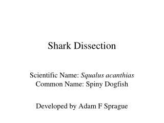 Shark Dissection