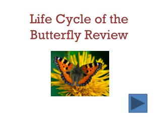 Life Cycle of the Butterfly Review