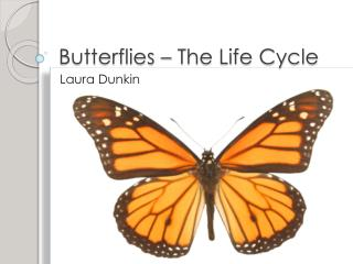 Butterflies – The Life Cycle