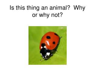 Is this thing an animal?  Why or why not?