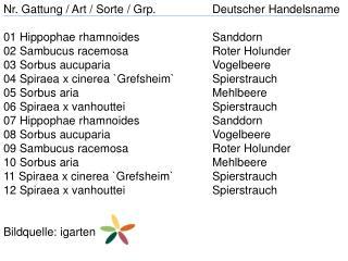 Nr. Gattung / Art / Sorte /  Grp . Deutscher Handelsname 01  Hippophae rhamnoides Sanddorn