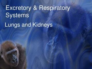 Excretory & Respiratory Systems