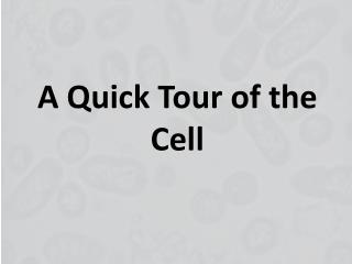 A  Quick Tour  of the  Cell